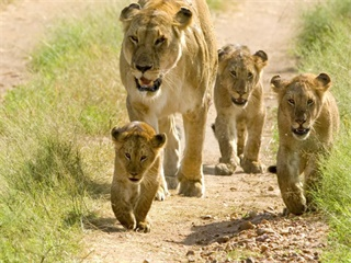 6-Day Wilderness of Tanzania Scheduled Safari Tour from Arusha