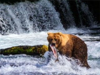 1-Day Katmai National Park Bear Viewing