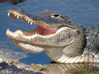 Everglades Airboat Adventure Tour from Miami