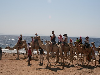 Abu Galum and Blue Hole Safari Camel Ride and Snorkeling Tour