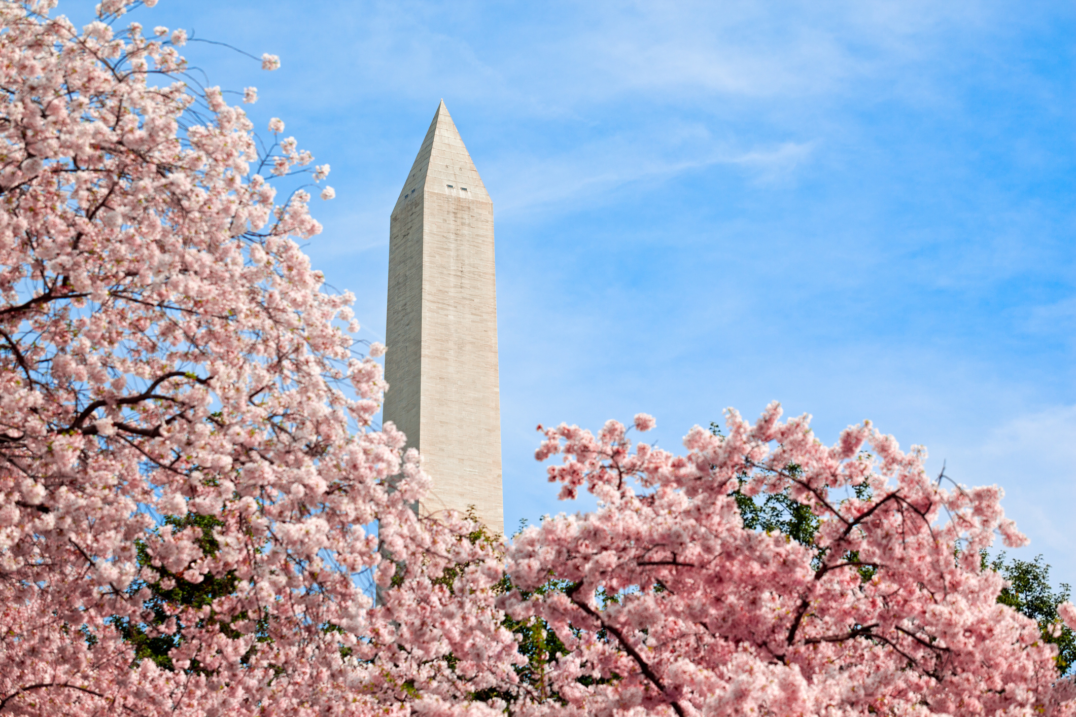 3-Day Washington DC Cherry Blossom, Amish Tour from Chicago