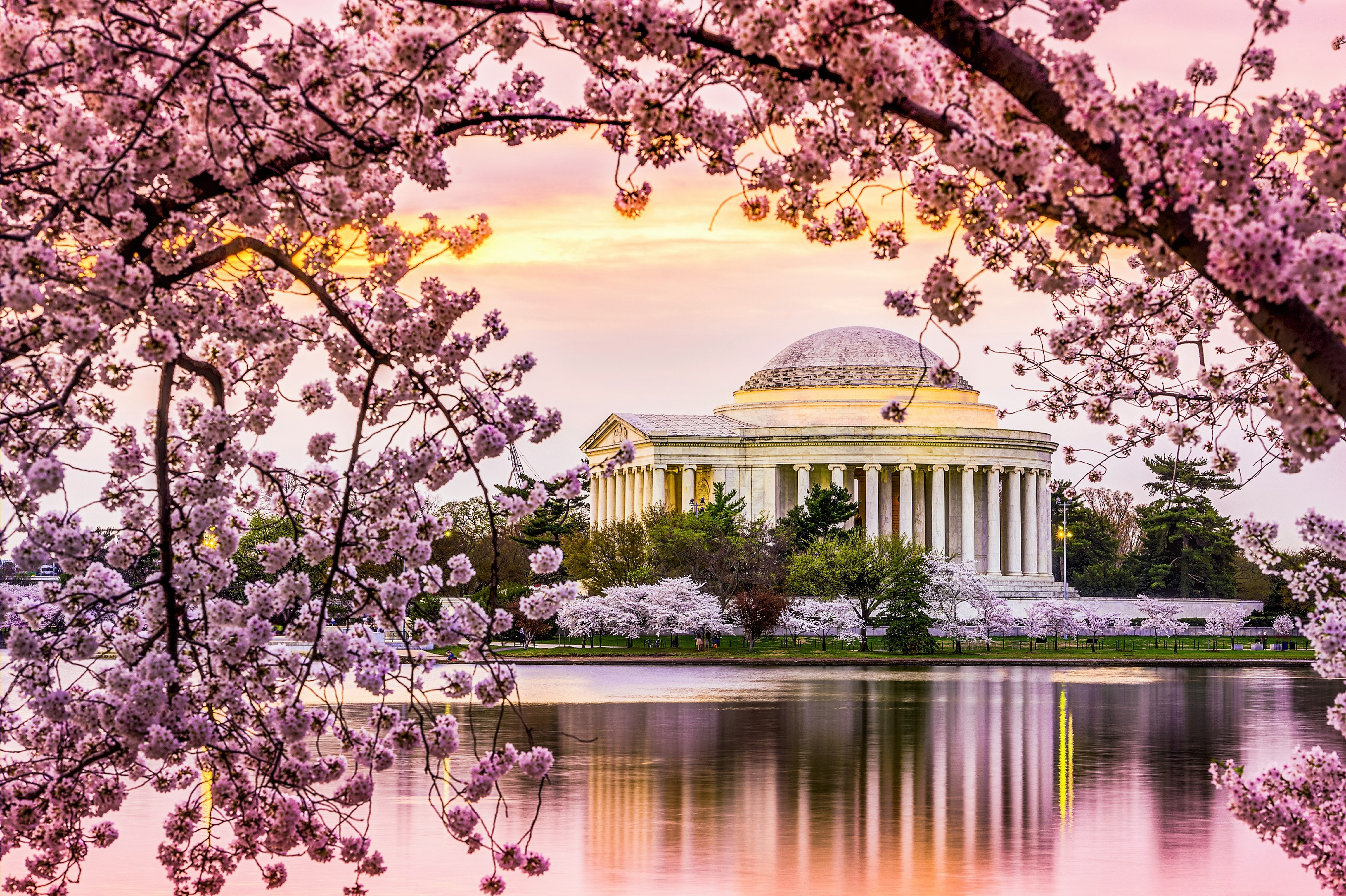 1-Day Washington DC, Tidal Basin Cherry Blossom Tour from New York