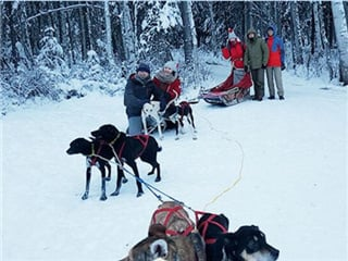 Alaska Dog Sledding Tour from Fairbanks...