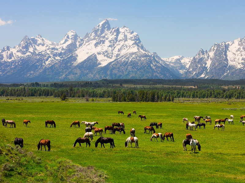 4-Day Grand Teton, Yellowstone, Mountain Rushmore, Salt Lake City and Great Lake Tour from Salt Lake City