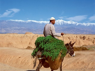 4-Day Todra Gorges, Merzouga, Village of Khamlia, Morocco Desert Tour from Fez