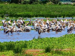 5-Day Tarangire, Serengeti & Ngorongoro from Arusha