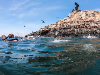 Swimming with Sea Lions at Palomino Island with Private Service
